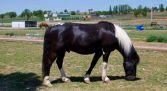 Excursiones a caballo Ribera del Duero