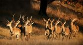 Reserva natural - Campo de Azaba