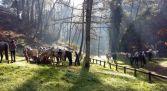 Rutas a caballo Castilla y León - Gredos Ecuestre