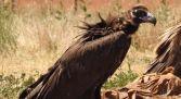 Ruta ornitológica Ribera del Duero - Abubilla Ecoturismo