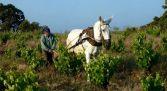 Visita vinos Pirita