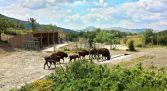 Visita Reserva del Bisonte Europeo - san cebrián de Mudá