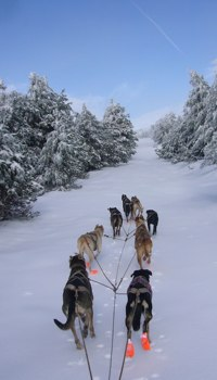 Carrera Internacional de Mushing - Soria Unlimited