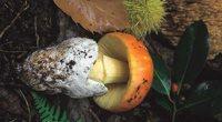 sendero micologico herguijuela madronal cepeda mini